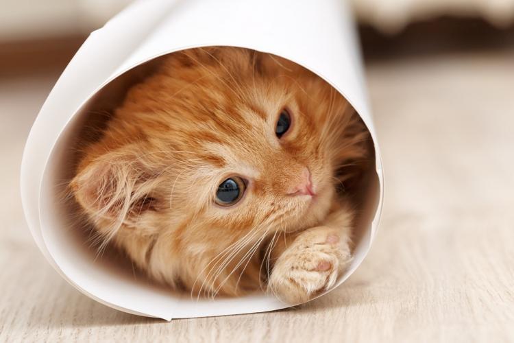 a macska pénzt keres a felek jogai az opciós ügyletekkel