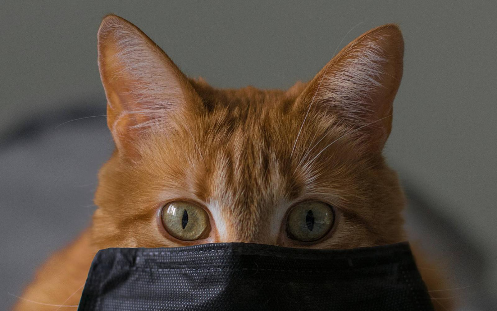macska pénzt keres video